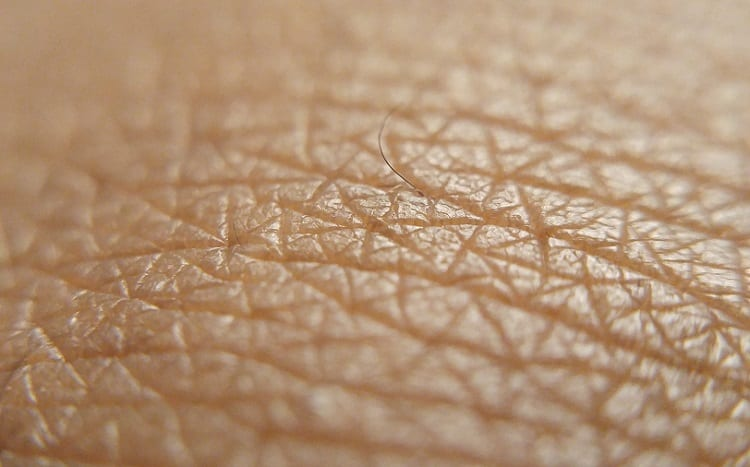 What is Skin, Actually?